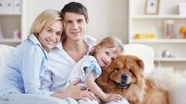 Wills & Trusts dog-young-family Direct Wills Havant
